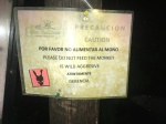 Palenque - Wild Monkey